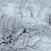 آماده سازی باغ برای زمستان